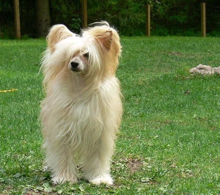 Koiran laihtuminen ja lihaskato
